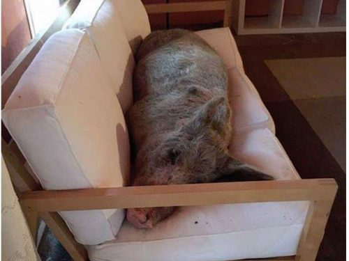 LEFT OPEN THE ENTRANCE WINDOW OF THE FARM IN THE NIGHT: THEY FIND A GUEST IN THE SOFA