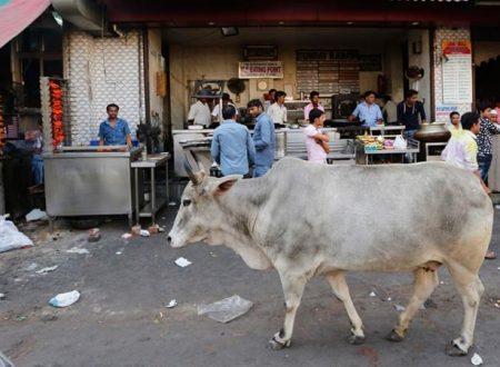 India's politics of meat