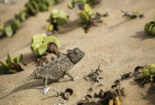 Iran: West used 007 lizards for spying